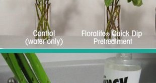 A re-hydrator will help your bulk wedding flowers awake from a dry state after d...
