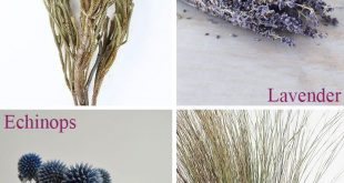 Find unique and naturally beautiful dried and preserved flowers, grasses, and eu...