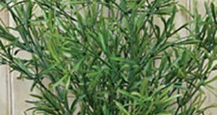 "Asparagus Pick / Spray Large - 21"" High - Floral Arranging Craft - WIC-FV91303TT"