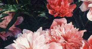 Choosing The Best Pink Flowers for Your Lovely Garden