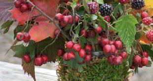 Herbstschätze arrangieren | Mein schönes Land bloggt