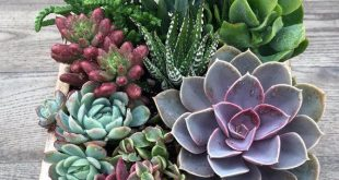 Saftiges Arrangement   Kleine rustikale Schublade Pflanzer   Saftiges Geschenk   Geschenk