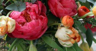 coral charm peony orange ranunculus peach parrot tulip